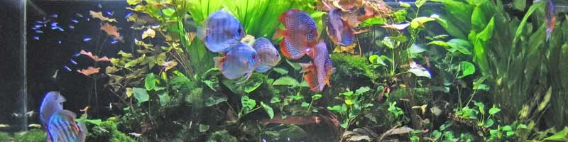 Aquaidea negozio per la vendita online di acquari d for Vendita discus online