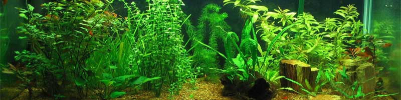 Aquaidea negozio per la vendita online di acquari d for Vendita acquari marini completi online