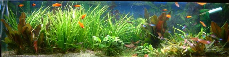 Aquaidea negozio per la vendita online di acquari d for Arredo acquario acqua dolce