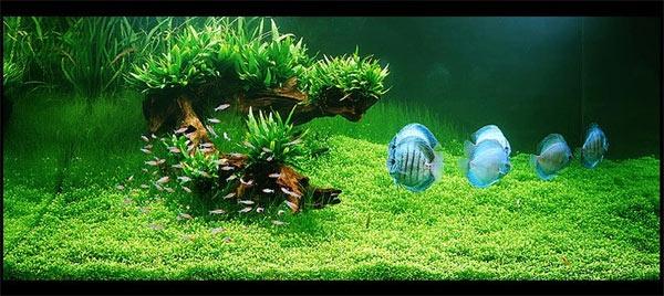 Aquaidea negozio per la vendita online di acquari d for Acquario arredamento